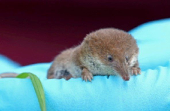 "<p>The challenge of being small - alternative wintering strategies in high-metabolic non-hibernating terrestrial mammals<a id=""_anchor_1"" name=""_msoanchor_1"" href=""#__target_object_not_reachable""></a></p>"
